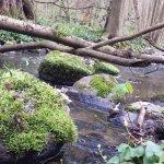 Bärenwald bach richtung Plauer See