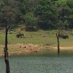 Periyar Wildlife Sanctuary Foto