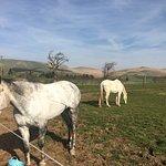 Peggyslea Farm