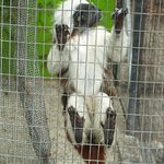St. Maarten Zoo