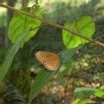 Photo of Samui Butterfly Garden