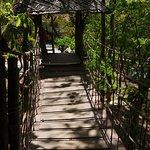 Tree top coffee house