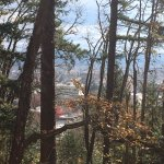 A view of Eugene on a sunny day through the trees :) - top of Skinner Butte