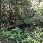 Sinharaja Forest Reserve Foto