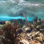 The reef near Klein Bonaire
