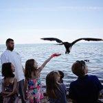 Feeding the Frigate Birds