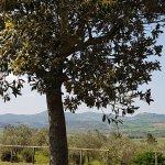 Photo de Agriturismo Il Canterino