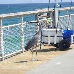 bird on pier
