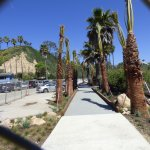 New boardwalk and new palm trees