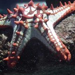 A big star to the Sea World Aquarium