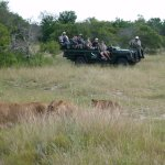 Game drive and the Southern Pride.