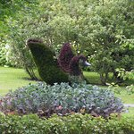 A topiary surrounded by purple kale