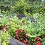 Inside the Edibles' garden