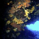Second dive 2