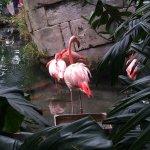 Phoenix Parc Floral de Nice Foto