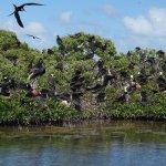 Magnificent Frigates at the Bird Sanctuary