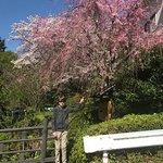Photo of Tonosawa Ichinoyu Shinkan