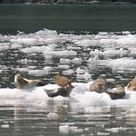 Stan Stephens Glacier & Wildlife Cruises Foto