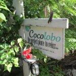 Photo de Cocolobo