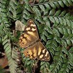 brown butterfly on fern