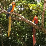 "These macaws were greeting us with ""Hola!"""