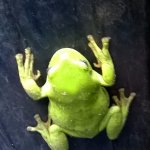 Lots of wildlife and lots of frogs, this one was in the bin when I lifted the lid