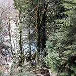 Photo de Lynn Canyon Park