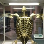 Foto de Museo de Ciencias Naturales de La Plata