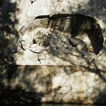 Photo of Dying Lion of Lucerne Monument