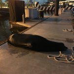 Saw a sea lion on the dock when we landed...a huge adult who was very talkative...