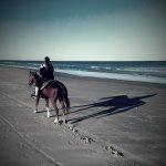 "Jesse, the ""Caddilac"" of beach horses. Smoothest trot on Amelia Island!"