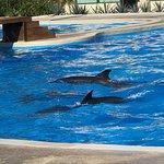 Photo of Dolphinaris Tulum
