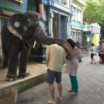 Cutie elephant , Lakshmi