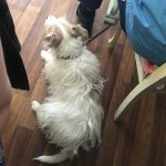 Pet friendly... staff were ready and waiting to treat this regular customer to fuss and biscuit!