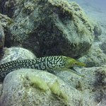 Foto de L&J Diving Tenerife