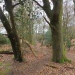 Thorncombe Woods.