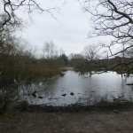 Pond in Woodland area.