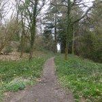 Path through woodland Trails.