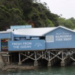 Mangonui Fish Shop 1