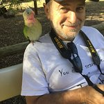 Friendly parrot in the walk-through aviary...
