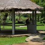 Monkey family relaxing in front of the rooms near the lake