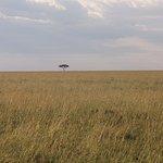 Maasai Mara Landscape