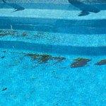 Marina Club Lagos Resort لوحة