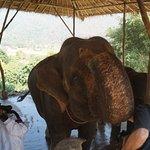 Photo of Woody Elephant Training