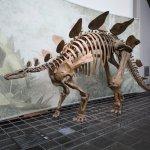 Photo of Senckenberg Natural History Museum (Naturmuseum Senckenberg)
