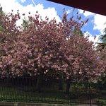Spring trees were flowering