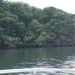 l'île aux oiseaux (sortie avec Will)