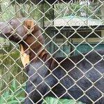 Quistacocha Zoo