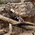 Bronx Zoo Foto