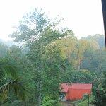 Vista hacia el bosque desde el balcón del segundo nivel